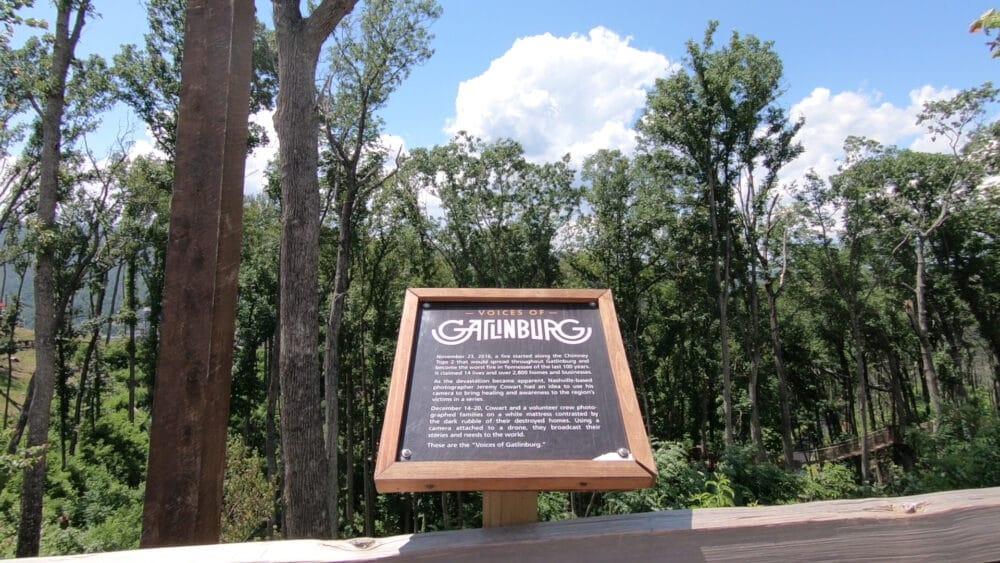 Memorial Forest Walk - 10