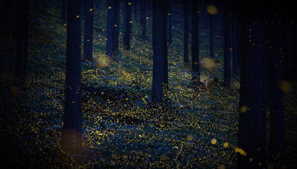 Fireflies-HallowMountain-web