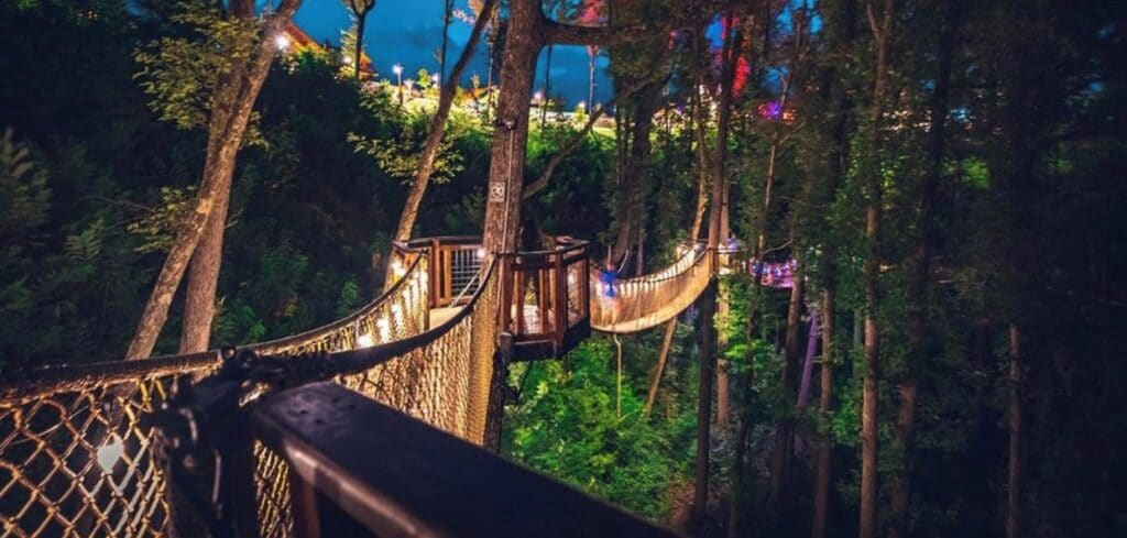 treetop Skywalk at night2